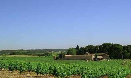 Vineyard walk at Domaine Saint Hilaire