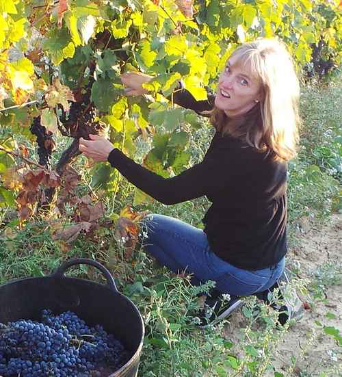 Lisa harvesting Syrah grapes at Domaine Saint Hilaire